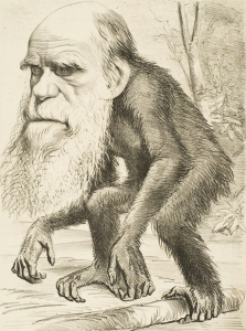 Darwin Goes Ape